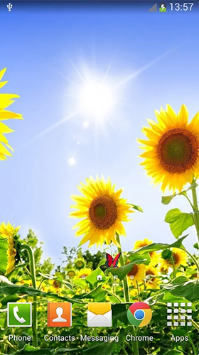 Download livewallpaper Sunflowers for Android. Get full version of Android apk livewallpaper Sunflowers for tablet and phone.