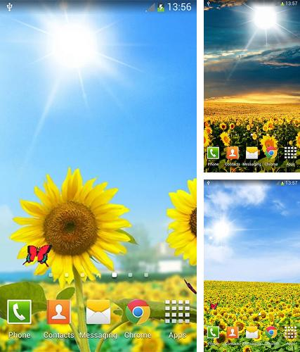 Download live wallpaper Sunflowers for Android. Get full version of Android apk livewallpaper Sunflowers for tablet and phone.
