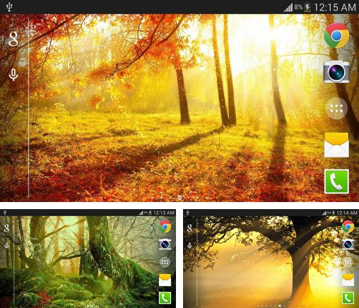 In addition to live wallpaper Winter mountains for Android phones and tablets, you can also download Sunshine for free.