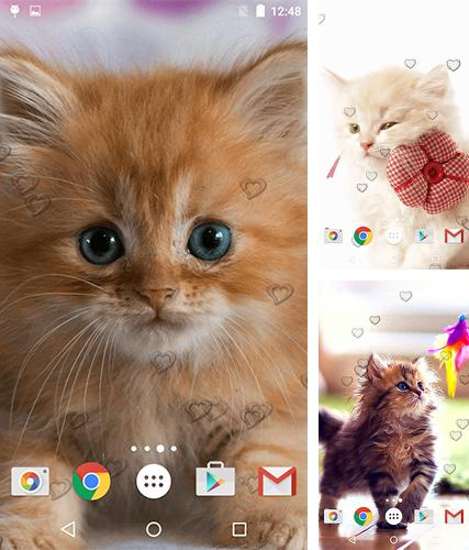 Download live wallpaper Сute kittens for Android. Get full version of Android apk livewallpaper Сute kittens for tablet and phone.