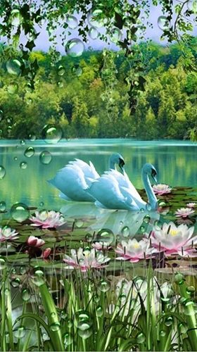 Download livewallpaper Swans and lilies for Android. Get full version of Android apk livewallpaper Swans and lilies for tablet and phone.