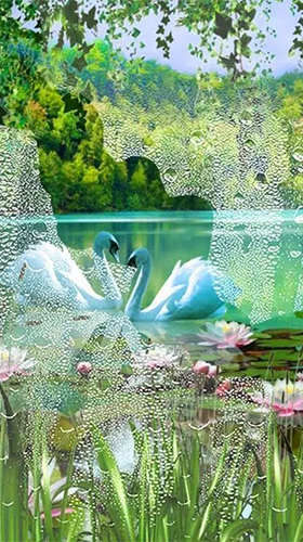 Download Swans and lilies - livewallpaper for Android. Swans and lilies apk - free download.