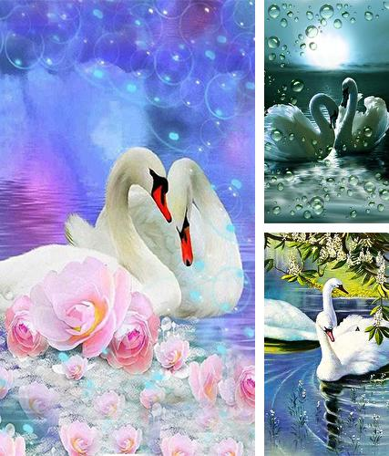 Swans by SweetMood