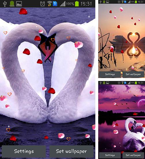 In addition to live wallpaper Fairy house for Android phones and tablets, you can also download Swans: Love for free.
