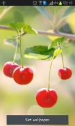 Sweet cherry - download free live wallpapers for Android. Sweet cherry full Android apk version for tablets and phones.