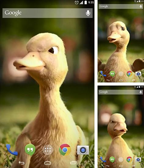 In addition to live wallpaper Glitter by HD Live wallpapers free for Android phones and tablets, you can also download Talking duck for free.