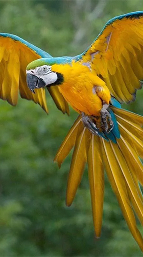 Download Talking parrot - livewallpaper for Android. Talking parrot apk - free download.