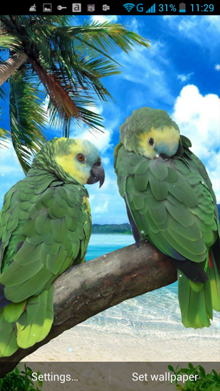 Download livewallpaper Parrot for Android. Get full version of Android apk livewallpaper Parrot for tablet and phone.