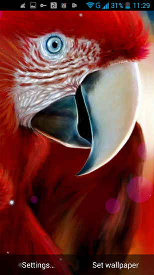 Download Parrot - livewallpaper for Android. Parrot apk - free download.