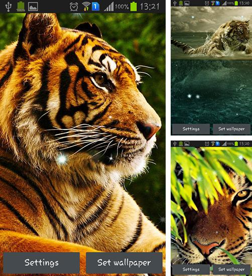 In addition to live wallpaper Tiger by Lorens Gamlis for Android phones and tablets, you can also download Tigers for free.