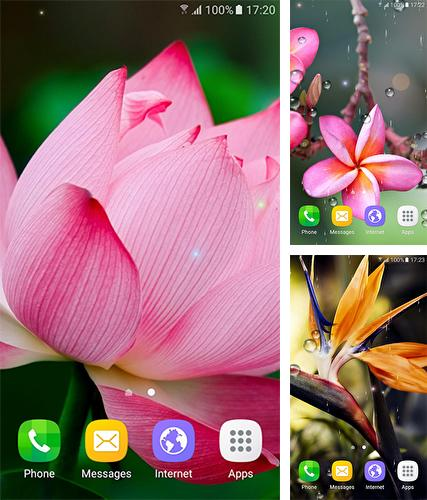 Download live wallpaper Tropical flowers for Android. Get full version of Android apk livewallpaper Tropical flowers for tablet and phone.