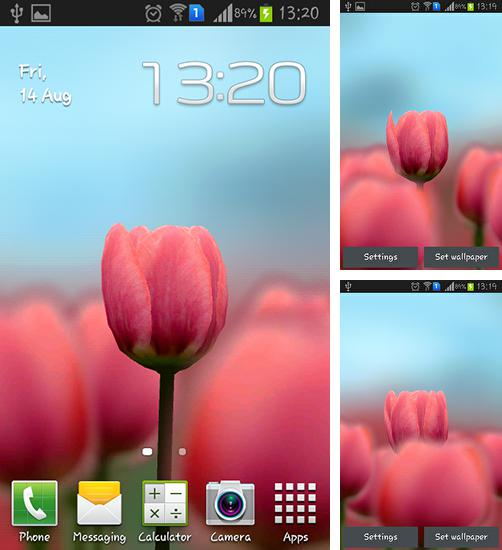 In addition to live wallpaper Early spring: Nature for Android phones and tablets, you can also download Tulip 3D for free.
