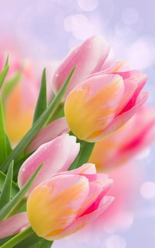 картинки на рабочий стол на весь экран цветы самые красивые живые обои тюльпаны продать авто в кредите птс на руках