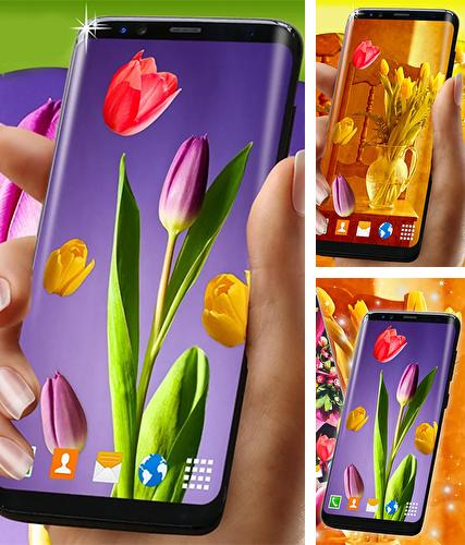 Kostenloses Android-Live Wallpaper Tulpen. Vollversion der Android-apk-App Tulips by 3D HD Moving Live Wallpapers Magic Touch Clocks für Tablets und Telefone.