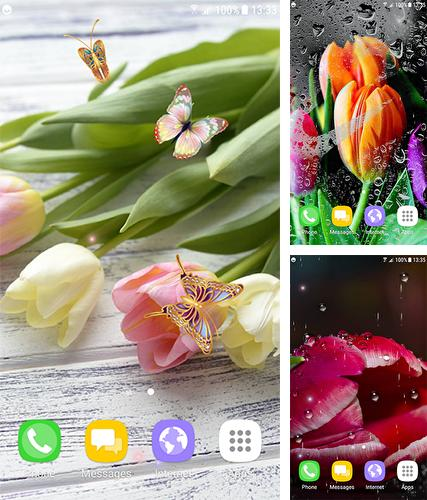 Download live wallpaper Tulips by Live Wallpapers 3D for Android. Get full version of Android apk livewallpaper Tulips by Live Wallpapers 3D for tablet and phone.