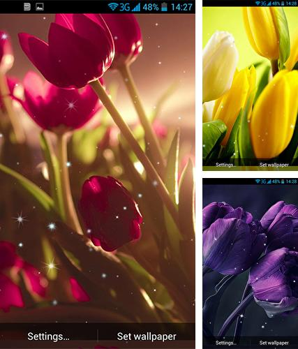 Download live wallpaper Tulips by Wallpaper qHD for Android. Get full version of Android apk livewallpaper Tulips by Wallpaper qHD for tablet and phone.