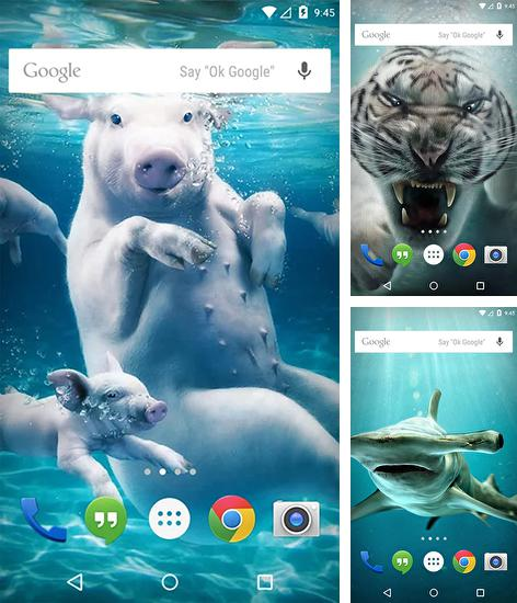 In addition to Underwater animals live wallpapers for Android, you can download other free Android live wallpapers for Venso CX-502.