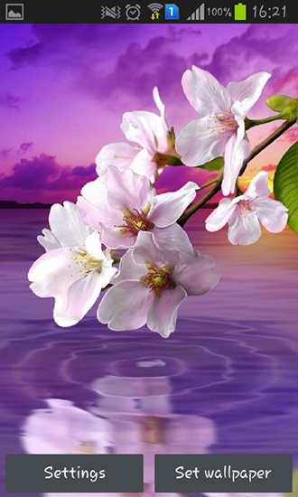 Download livewallpaper Water drop: Flowers and leaves for Android. Get full version of Android apk livewallpaper Water drop: Flowers and leaves for tablet and phone.