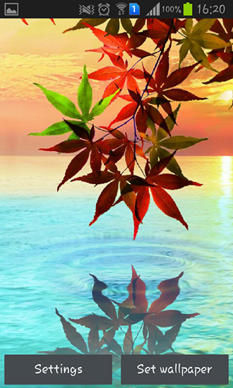 Download Water drop: Flowers and leaves - livewallpaper for Android. Water drop: Flowers and leaves apk - free download.