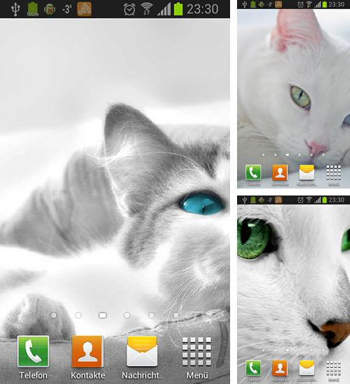 In addition to live wallpaper Pink hearts for Android phones and tablets, you can also download White cats for free.