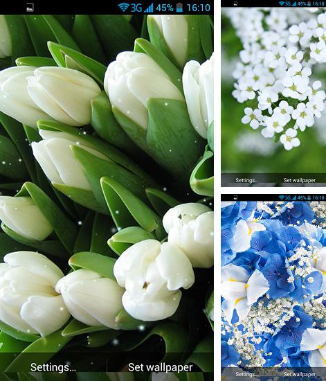 In addition to live wallpaper Fire tornado for Android phones and tablets, you can also download White flowers for free.