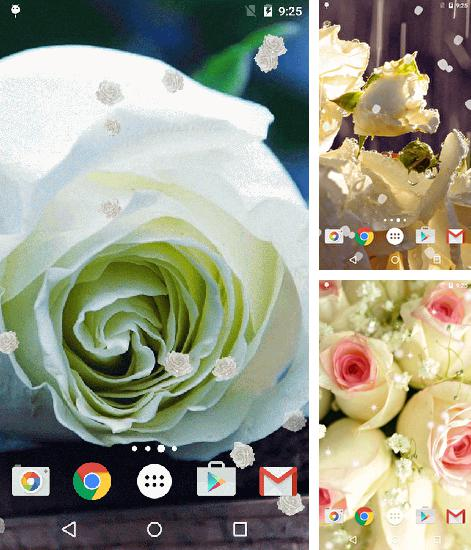 In addition to live wallpaper Diamonds for girls for Android phones and tablets, you can also download White rose for free.