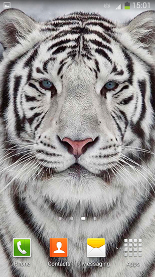 White Tiger Live Wallpaper For Android Free Download Tablet And Phone