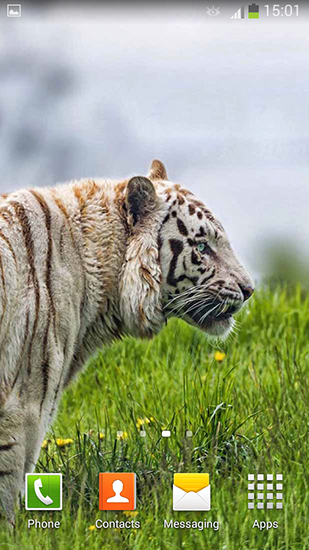 Download livewallpaper White tiger for Android. Get full version of Android apk livewallpaper White tiger for tablet and phone.