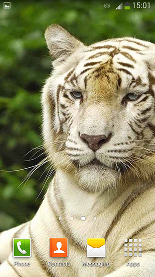 Download White tiger - livewallpaper for Android. White tiger apk - free download.