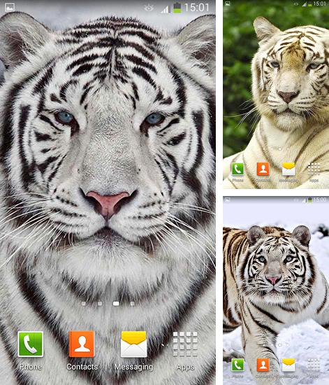 Download live wallpaper White tiger for Android. Get full version of Android apk livewallpaper White tiger for tablet and phone.