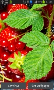 Wild berries - download free live wallpapers for Android. Wild berries full Android apk version for tablets and phones.