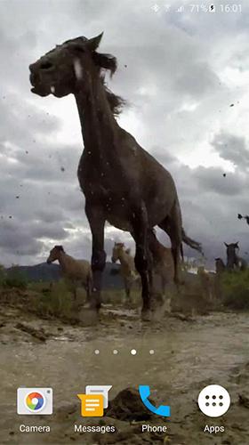 Wild Horses Pour Android à Télécharger Gratuitement Fond D