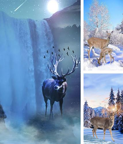 Kostenloses Android-Live Wallpaper Winterhirsch. Vollversion der Android-apk-App Winter deer für Tablets und Telefone.