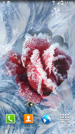 Kostenloses Android-Live Wallpaper Winterblumen. Vollversion der Android-apk-App Winter flowers für Tablets und Telefone.