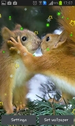 Winter squirrel - download free live wallpapers for Android. Winter squirrel full Android apk version for tablets and phones.