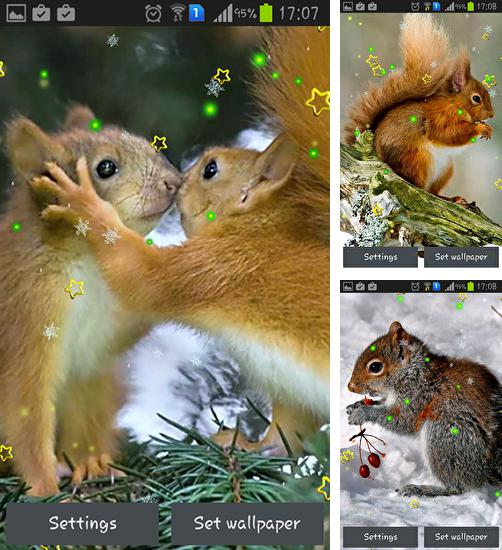 In addition to live wallpaper Cat HD for Android phones and tablets, you can also download Winter squirrel for free.