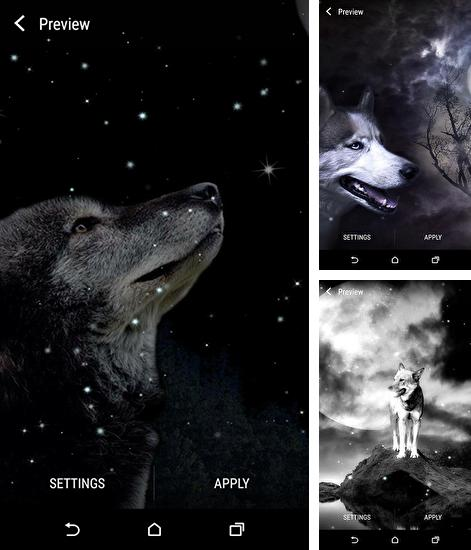 In addition to live wallpaper Books for Android phones and tablets, you can also download Wolf and Moon for free.