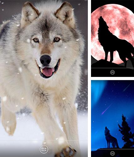 Download live wallpaper Wolf by orchid for Android. Get full version of Android apk livewallpaper Wolf by orchid for tablet and phone.