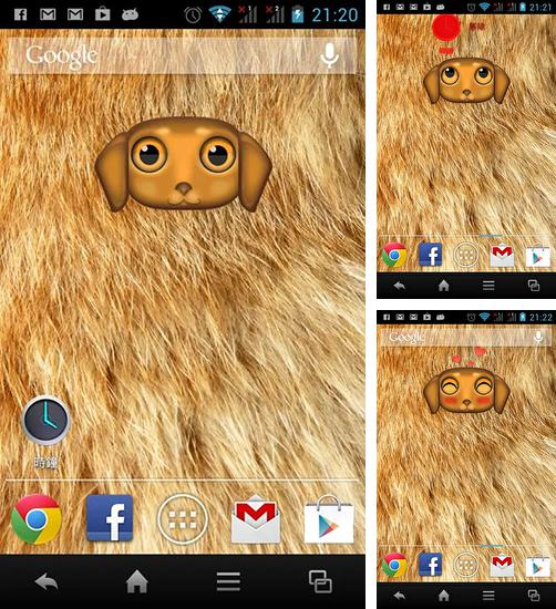 In addition to Zoo: Dog live wallpapers for Android, you can download other free Android live wallpapers for ZTE Q705U.