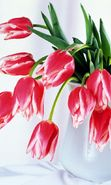 Download free mobile wallpaper 6264: Plants, Flowers, Tulips, Bouquets, March 8, International Women's Day (IWD) for phone or tab. Download images, backgrounds and wallpapers for mobile phone for free.