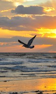 Download free mobile wallpaper 32919: Seagulls,Sea,Landscape,Sunset for phone or tab. Download images, backgrounds and wallpapers for mobile phone for free.