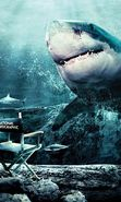 Download free mobile wallpaper 19398: Sharks, Sea, Fishes, Animals for phone or tab. Download images, backgrounds and wallpapers for mobile phone for free.