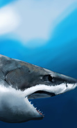 Download free mobile wallpaper 40171: Sharks,Pictures,Animals for phone or tab. Download images, backgrounds and wallpapers for mobile phone for free.