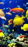 Download free mobile wallpaper 31411: Aquariums,Fishes,Animals for phone or tab. Download images, backgrounds and wallpapers for mobile phone for free.