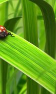 Download free mobile wallpaper 1384: Grass, Insects, Art, Ladybugs for phone or tab. Download images, backgrounds and wallpapers for mobile phone for free.