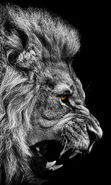 Download free mobile wallpaper 15676: Art photo, Lions, Animals for phone or tab. Download images, backgrounds and wallpapers for mobile phone for free.