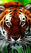 Download free mobile wallpaper 35747: Art photo,Tigers,Animals for phone or tab. Download images, backgrounds and wallpapers for mobile phone for free.