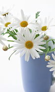Download free mobile wallpaper 19063: Cups, Flowers, Objects, Plants, Camomile for phone or tab. Download images, backgrounds and wallpapers for mobile phone for free.