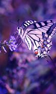 Download free mobile wallpaper 19709: Butterflies, Insects for phone or tab. Download images, backgrounds and wallpapers for mobile phone for free.