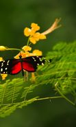 Download free mobile wallpaper 22059: Butterflies, Insects for phone or tab. Download images, backgrounds and wallpapers for mobile phone for free.